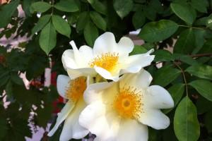 Bellissimi fiori nel nostro vivaio