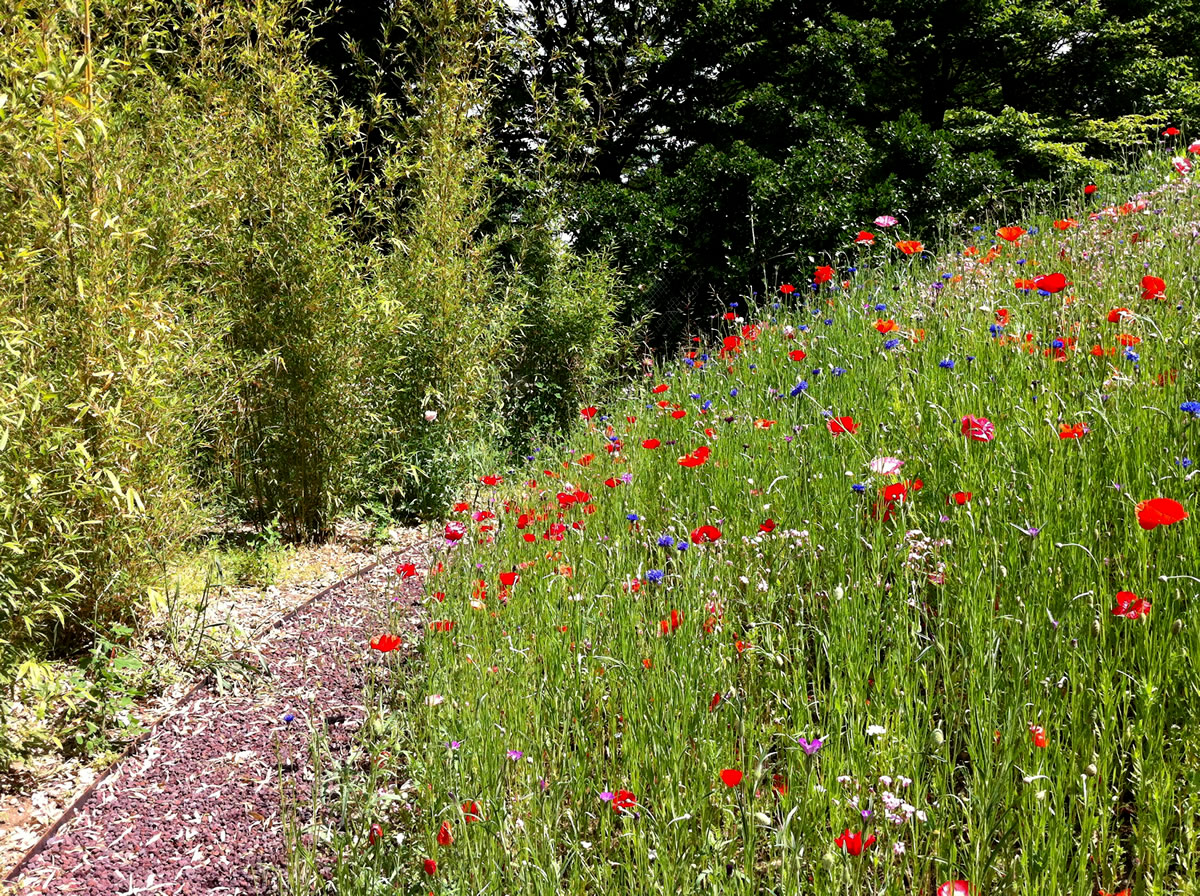 Giardino privato dal ben giardini - Progetto giardino privato ...