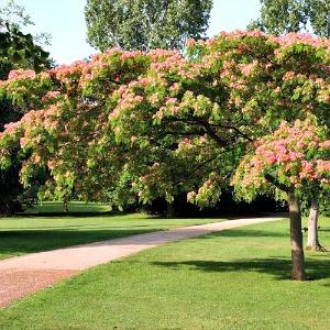 Come ottenere un 39 ottima zona d 39 ombra in giardino dal ben for Piante da giardino mezz ombra