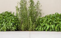 piante aromatiche valdobbiadene