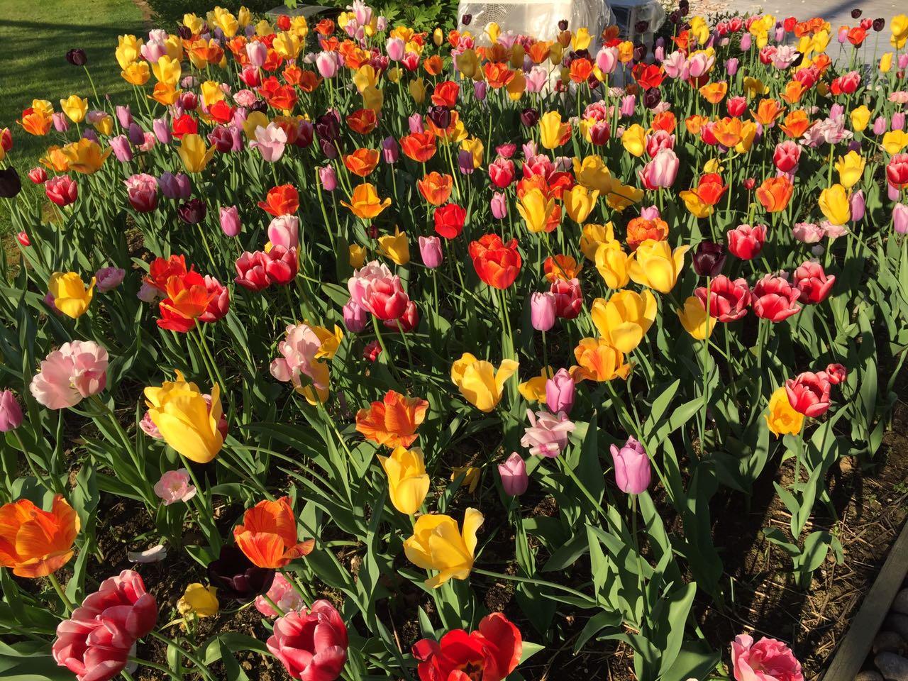 colori-natura-primavera