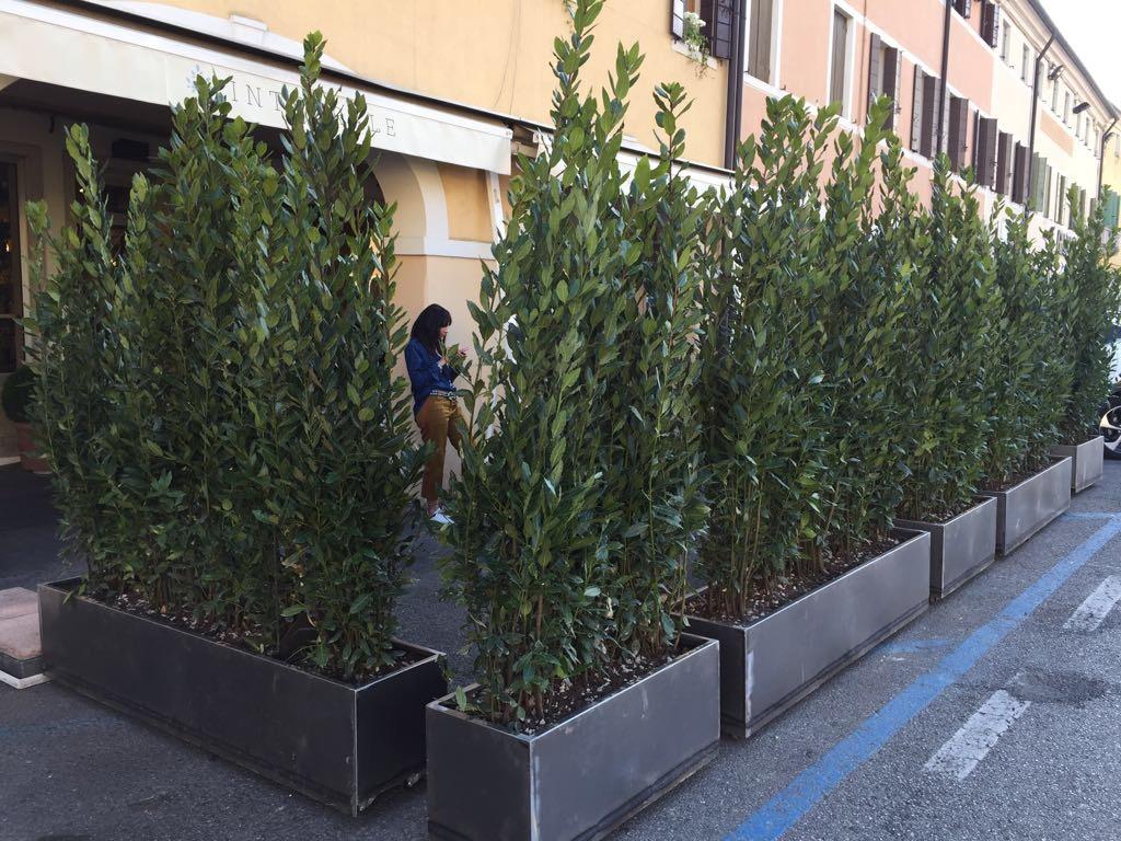 Fioriere e vasi come organizzare le tue piante in for Piante per terrazzo