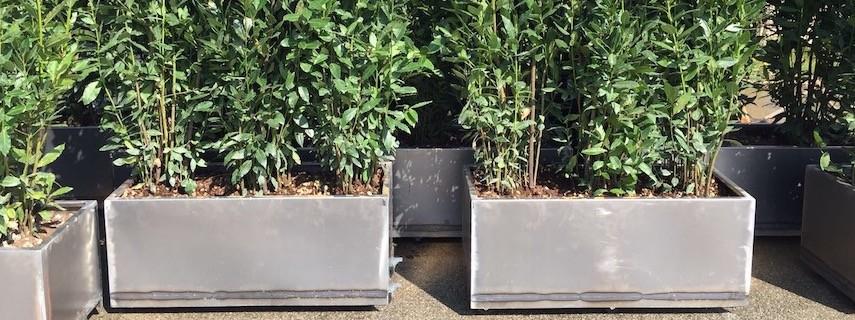 Fioriere e vasi come organizzare le tue piante in for Piante da esterno in vaso