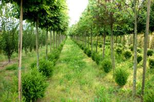 vivaio dal ben giardini Musile di Piave