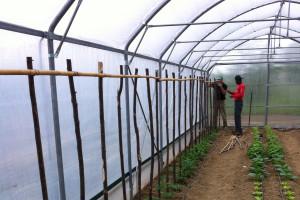 realizzazione di una serra per orti