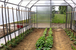 realizzazione coltivazioni in orto