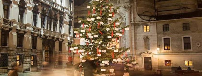Dal Ben Giardini fornisce l'albero di Natale installato in campo San Geremia con i desideri dei migranti