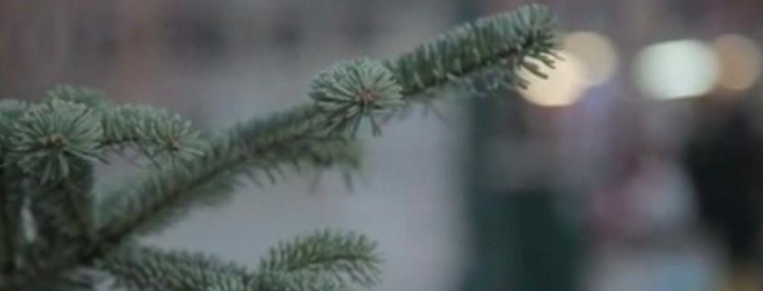Il video di Sciabica sull'albero che ha raccolto i desideri dei migranti per il 2014