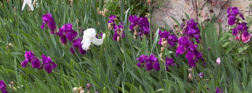 La primavera è alle porte: 5 utili attività per il vostro giardino