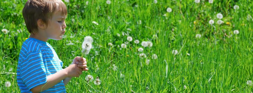 20 Marzo 2014: Equinozio di primavera! E riprendono i lavori in giardino…
