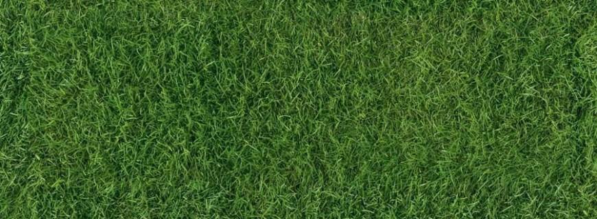 Realizzazione giardini: gli errori più comuni nella preparazione e manutenzione del prato