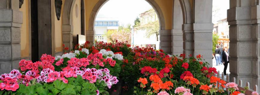 Andar per fiere e feste dei fiori  (Aprile-Maggio 2015)