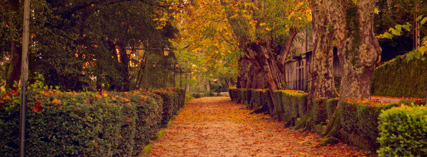 Giardinaggio autunnale: lavori da fare in giardino e terrazzo
