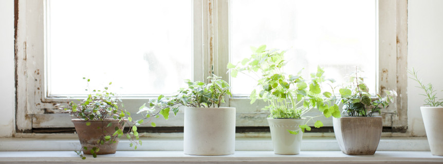 Le piante invernali da appartamento: quali scegliere?