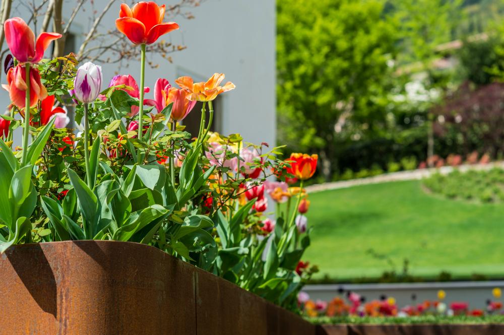 Tulipani giardino pensile