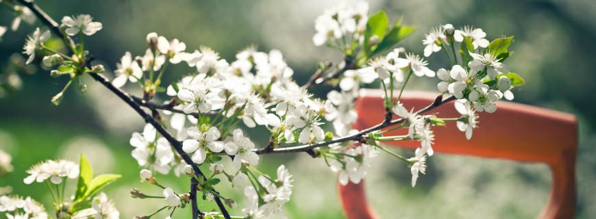 Il tuo giardino è pronto all'arrivo della Primavera? I lavori da fare in questo periodo