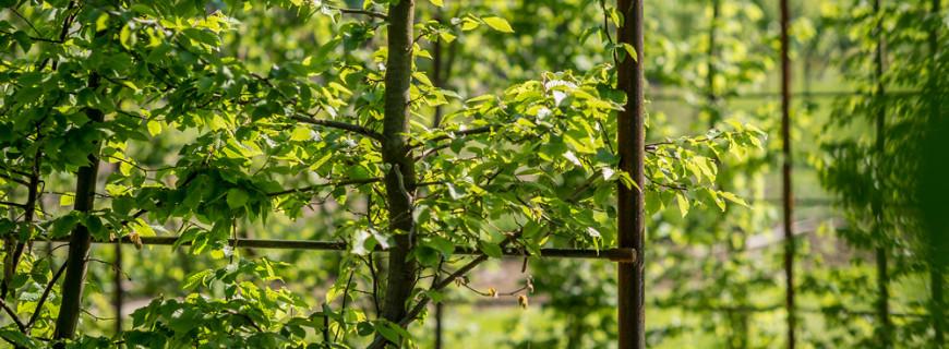Come progettare un giardino con il carpino dal ben giardini for Progettare un giardino