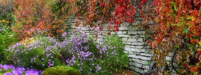 Le piante autunnali per giardino e terrazzo dal ben giardini for Migliori piante da terrazzo