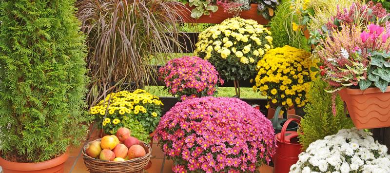 Le piante autunnali per giardino e terrazzo dal ben giardini - Piante terrazzo autunno ...