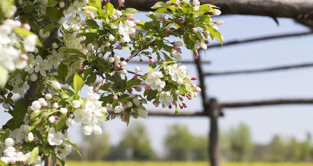 piante-cura-aprile-fiori