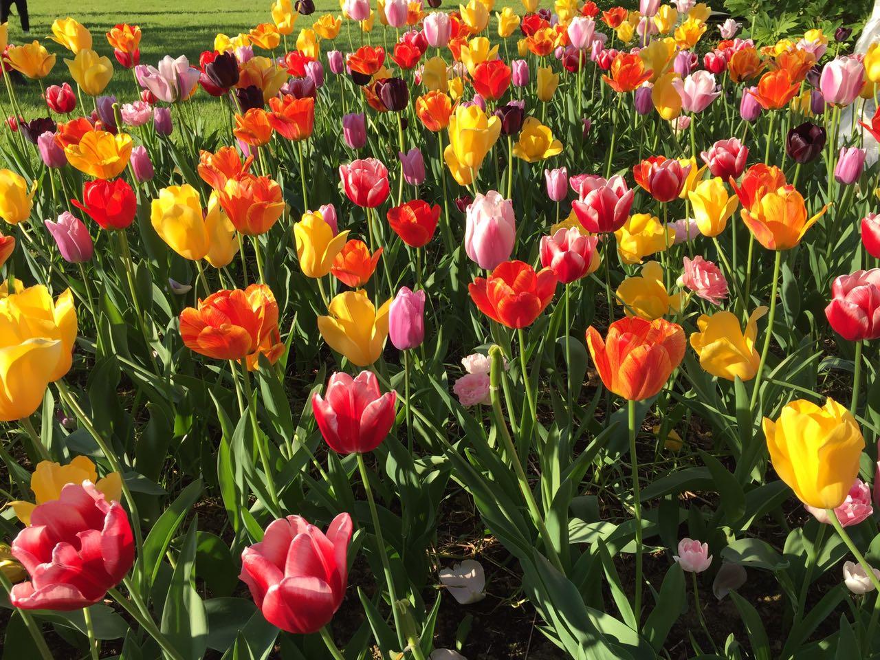 fiori-arredo-esterno