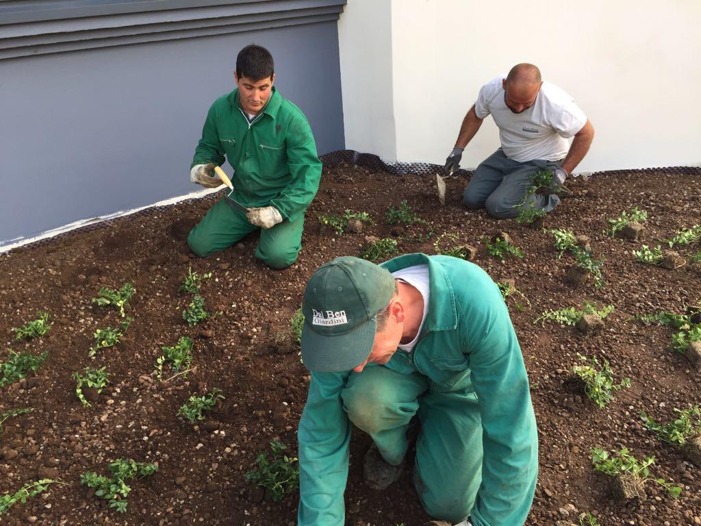 lavori giardino forno dasolo 4