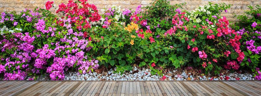 8 piante per colorare il tuo giardino in Primavera