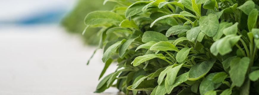 Come realizzare un'aiuola utile e profumata con le piante aromatiche