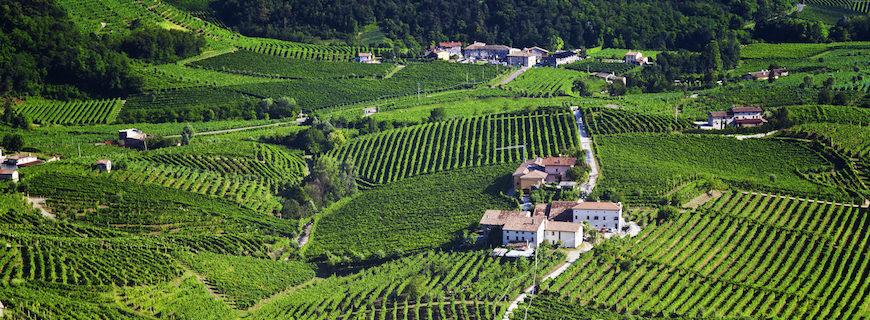 Giardini per Cantine: un biglietto da visita per tutto il territorio Conegliano Valdobbiadene
